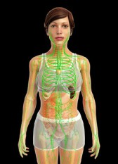 Lymphödem - Lymphsystem